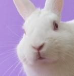 Adorable White Bunny