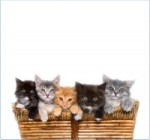 A Basket of Kittens