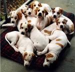 12 Puppies on a dog bed
