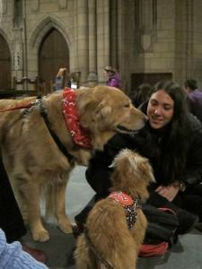 TDI Pups visiting Pitt Students